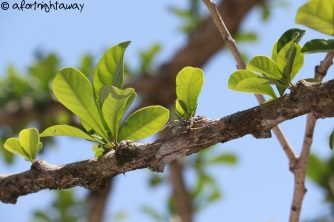growing tree leaf
