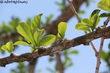 growing tree leaf