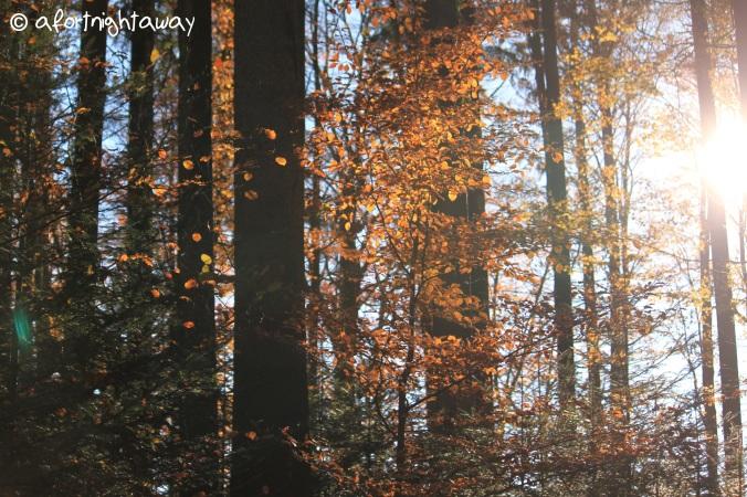 autumn, fall sun, tree